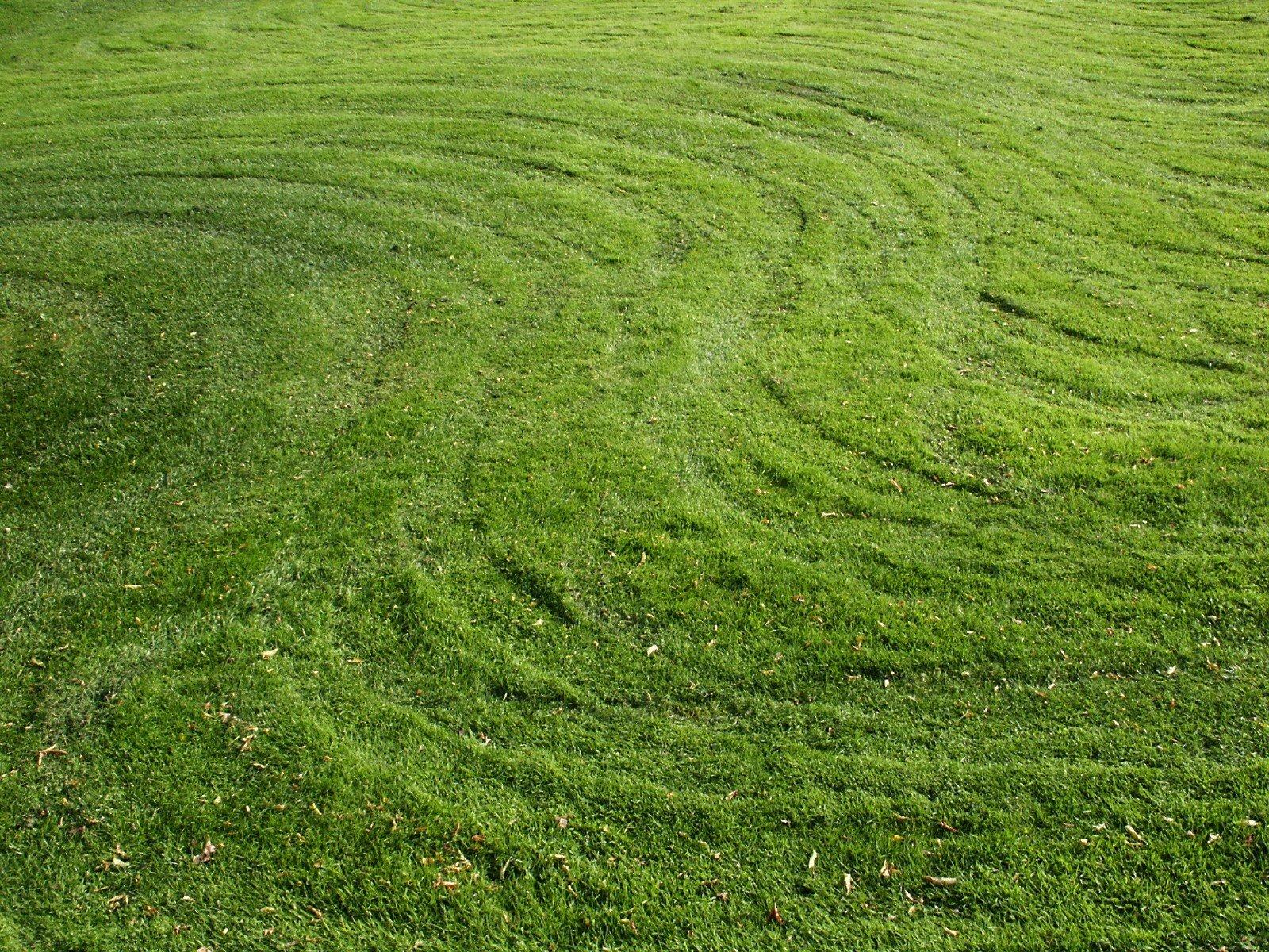 Robotgräsklippare allt vanligare i svenska trädgårdar